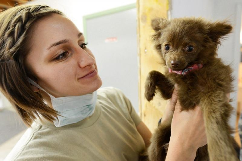 Female veterinarian with brown puppy